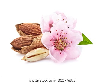Almonds nuts with pink flowers