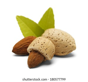 Almonds with Open, Half Open and Closed with Green Leaves Isolated on White Background.