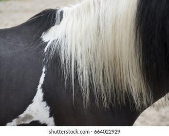 almost abstract closeup of long white manes on black horse