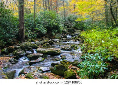 Almost the entire length of the beautiful 8.1 mile length of the Ramsey Cascades Trail exhibits tiny waterfalls bounding over the rocks, with rhododendron encompassing the area.