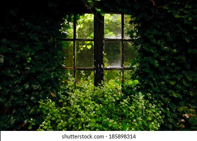 An almost overgrown window in a garden
