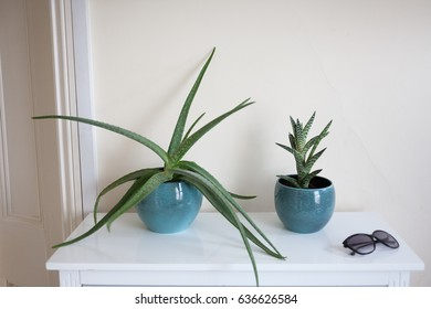 Aloe and fat plant in blue vases.