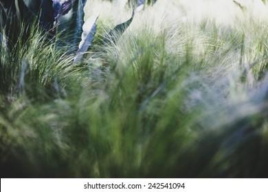 An aloe is hidden behind a riot of green grasses.