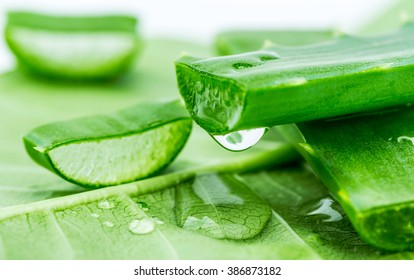 Aloe on green leaf