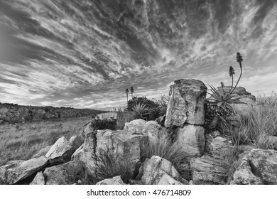 Aloe on high mountain rocks landscape sunset with cloudy skies