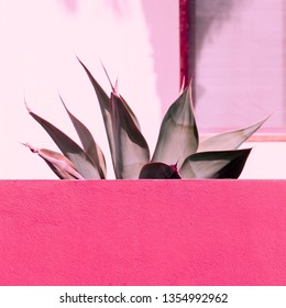 Aloe on a pink. Plant lovers. Minimal fashion design