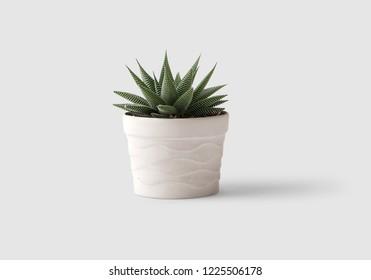 Aloe plant flowerpot