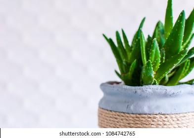 Aloe plant in Scandinavian interior, selective focus