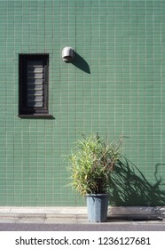 Aloe potted plant in front of a green textured retro styled wall in Tokyo, Japan.