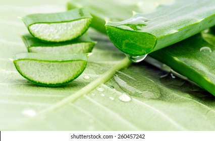 Aloe sliced on a green background