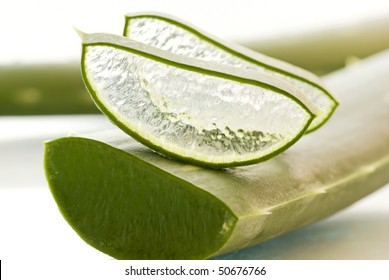Aloe Slices with Leaf