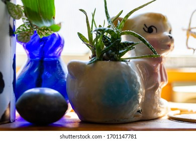 Aloe type houseplant potted in vintage white lamb pot surrounded by trinkets knick knacks on a wood window sill ledge