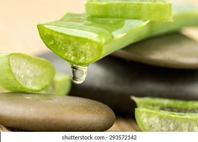 Aloe Vera (Aloe barbadensis Mill.,Star cactus, Aloe, Aloin, Jafferabad or Barbados) a very useful herbal medicine for skin treatment and use in spa for skin care.