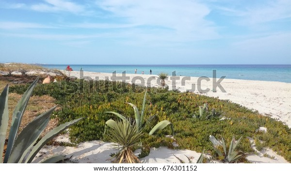 Aloe vera beach white sand Mahdia Tunisia