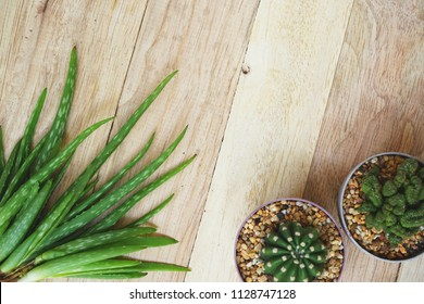 Aloe vera and cactus on wooden table background, skin care concept, copy space