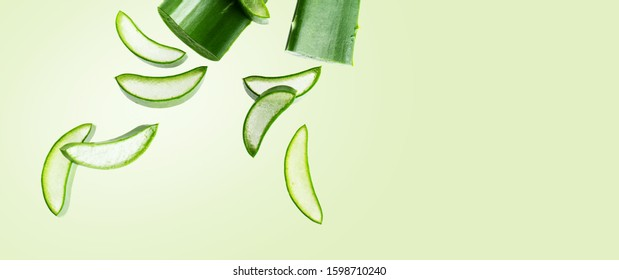 Aloe vera fresh leaf isolated on mint green background with copy space. Green fresh layout for ad products with aloe vera.