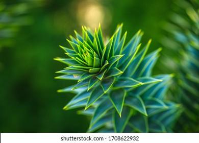Aloe Vera isolate on bokeh background. Macro detailed image tree leaf.