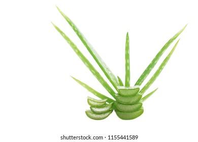 Aloe vera isolated on white background.