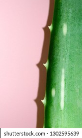Aloe vera leaf on pink background. Health and beauty concept. Closeup aloe piece with thorns and hard shadow.