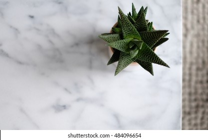 Aloe Vera on marble table
