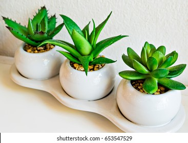 The Aloe Vera was on white table.