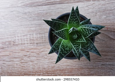 Aloe Vera plant in a pot on a wooden table