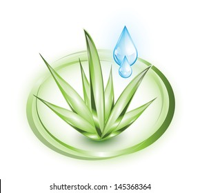 Aloe vera plant with water drops