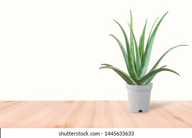 Aloe Vera plant in white pot soft shadow isolated on white background.