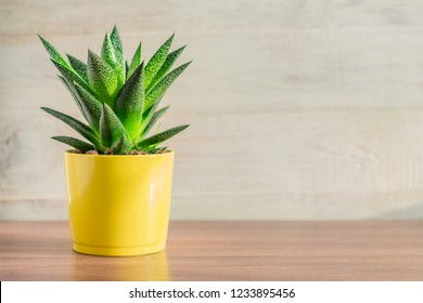 aloe vera plant in yellow ceramic pot on wooden table. Domestic gardening, Copy space for text