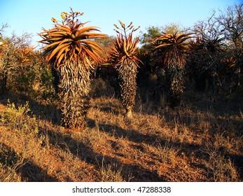 dating websteder i botswana