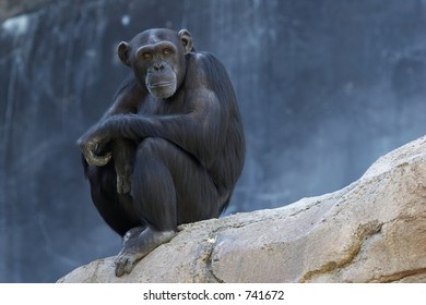 Alone adult chimpanzee sitting on a cliff and thinking