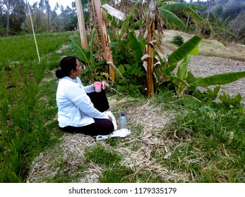 Alone In The Agricultural Area In The Dry Season, Banjar Kuwum, Ringdikit Village, North Bali, Indonesia