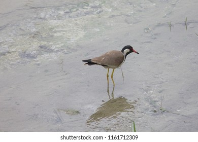 alone bird in water