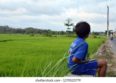 Alone children on the green rice field.