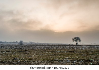 Alone distant tree in a field on a cloudy sunset. Frozen winter landscape
