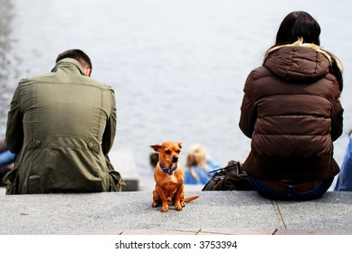 alone dog between a couple