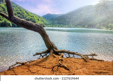Alone dry tree of the Borabay lake. The roots of this tree are on the ground. Borabay lake is a beautiful lake between the mountains. The lake is in Amasya city of Turkey.