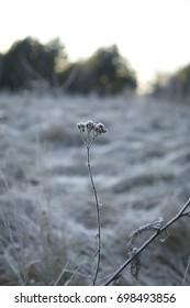 Alone frozen grass