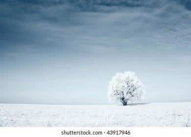 Alone frozen tree in field with blue sky