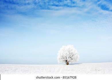 Alone frozen tree in snowy field and airy blue sky