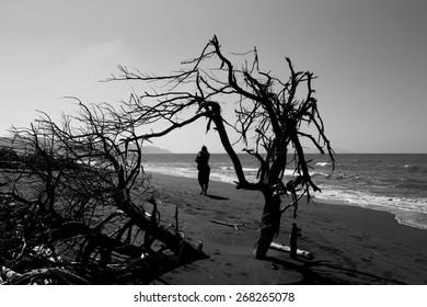Alone girl walking along the beach