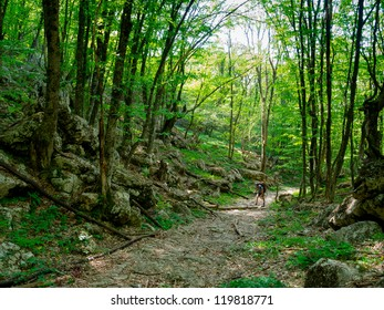 Alone hiker trekking in Crimea