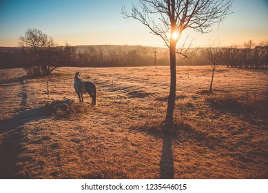 Alone horse on autumn pasture. Sunrise light in background