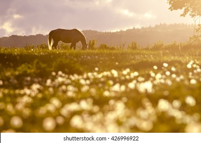 Alone horse on the meadow in the last light of calm colorful spring sunset
