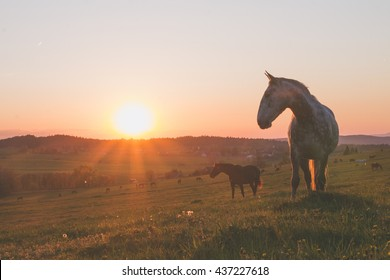 alone horse on meadow in sunset