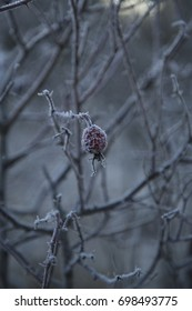 Alone isolated frozen berry