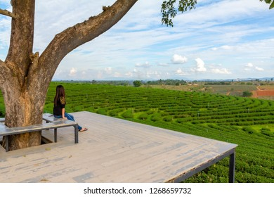 Alone lady sit on seat and look out tea field, feeling relax
