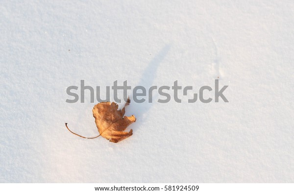 Alone leaf in snow at winter