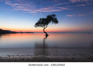 alone mangrove tree and morning sunrise on the beautiful beach and sky at Chumphon, Thailand. Sun shines through the mangrove trees the roots of the mangrove sea erosion mangrove tree