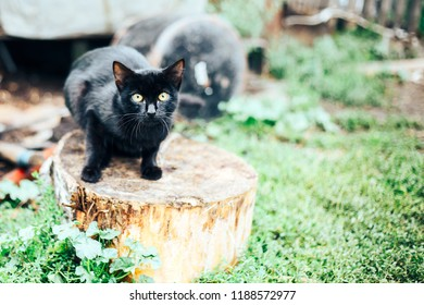 alone scared black homless cat sits on street afraid of